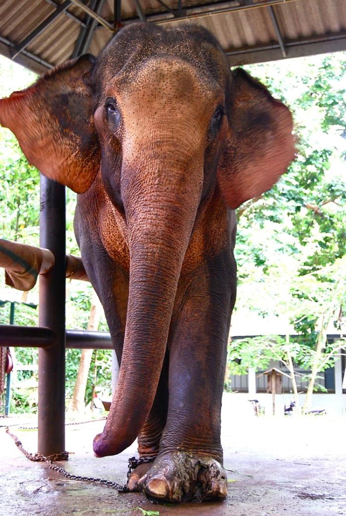 elephantphone
