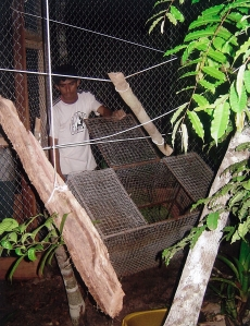 On this night, the first enclosure was finished, and a few monkeys were set free from cages