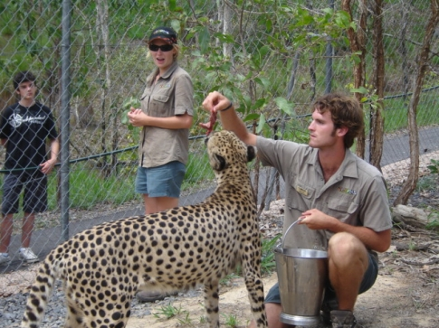 Every day at 1:15pm, we conducted a cheetah feed and chat for visitors. Sometimes I had to feed and talk, but no harm done :) It was thrilling